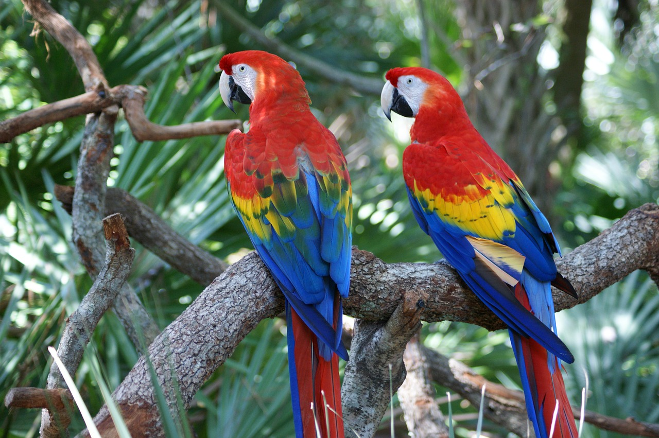 top 10 most beautiful animals in the world macaws