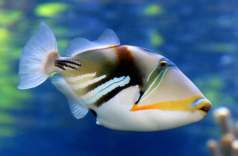 top 10 most beautiful animals in the world