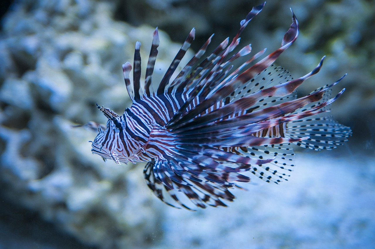 top 10 most beautiful animals in the world lion fish