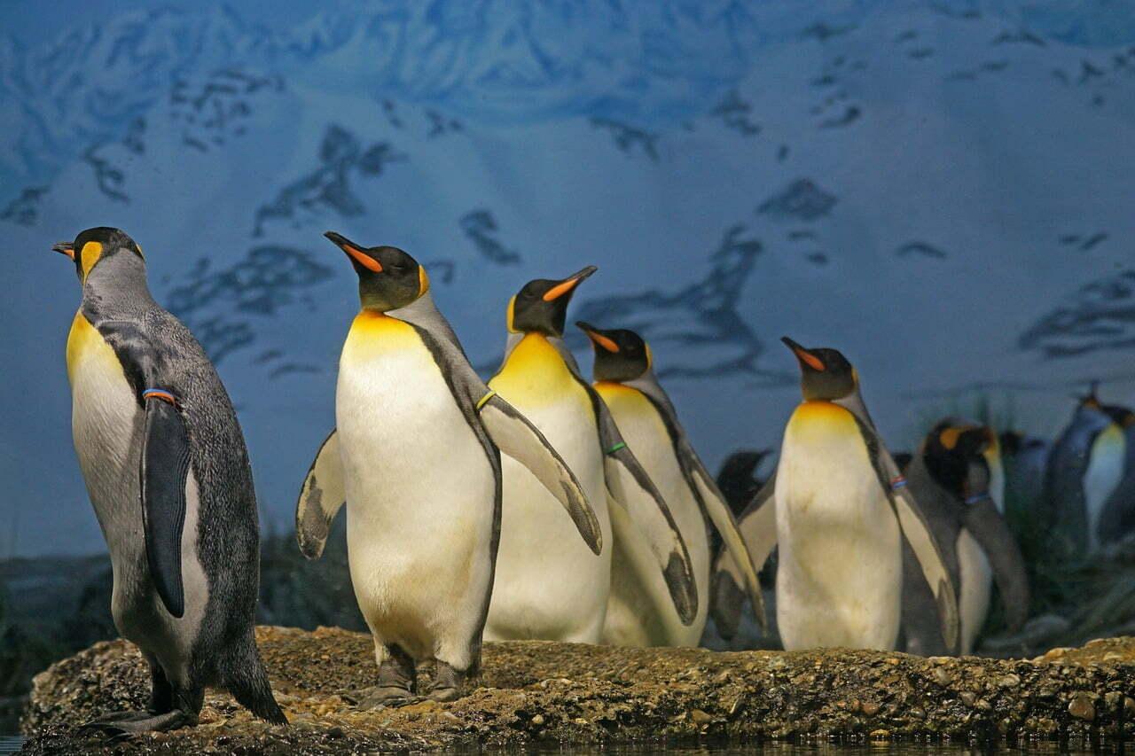 top 10 biggest birds in the world