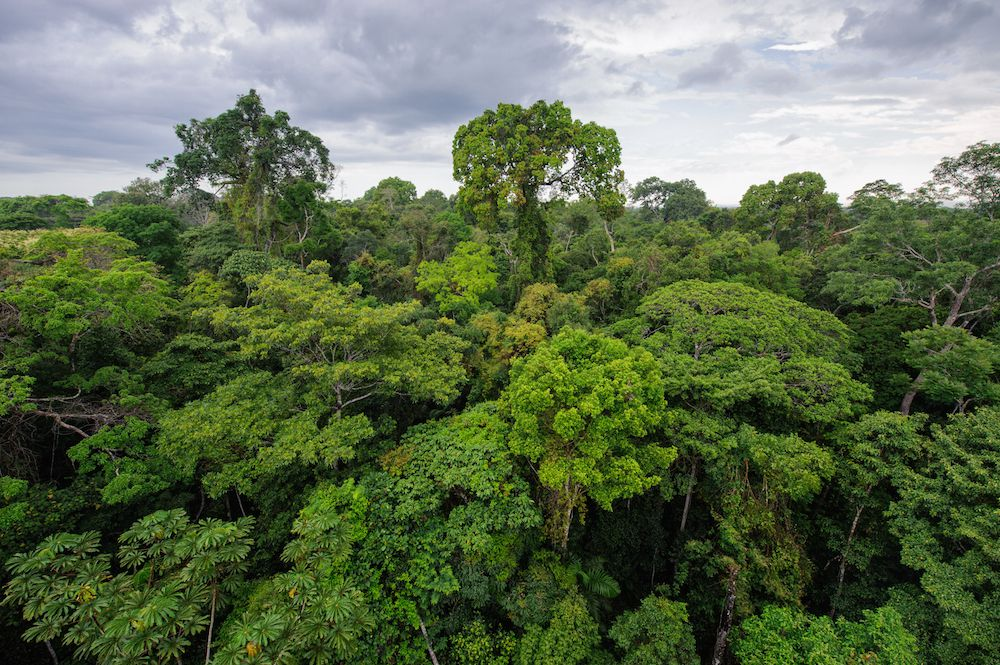 largest forest area in the world